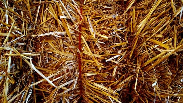 Looking for a needle in a haystack